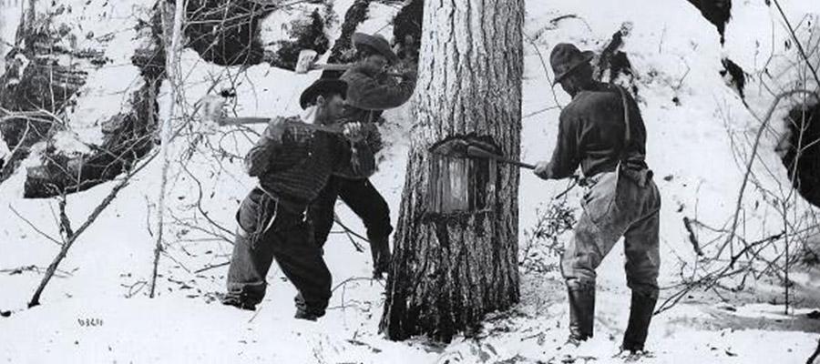 Men cutting trees